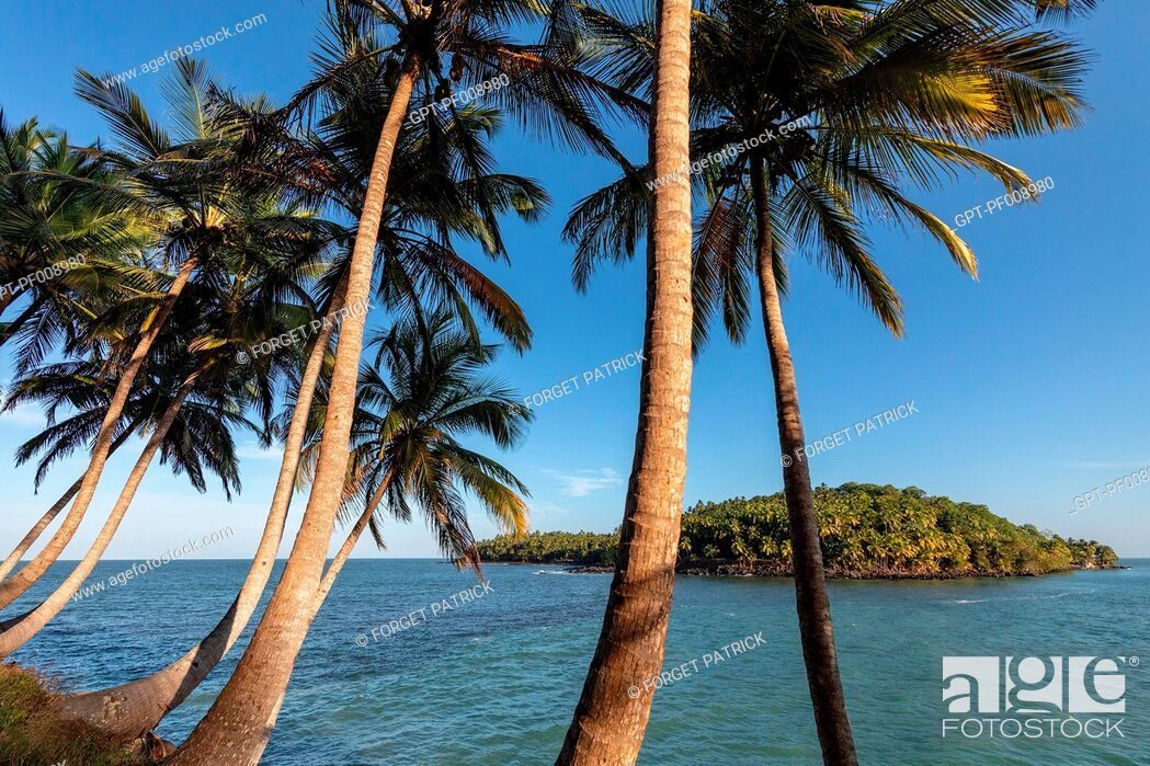 Stock Photo: PALM TREES ON ILE ROYALE WITH A VIEW OF ILE SAINT-JOSEPH ON WHICH THERE WAS ONCE A PENAL COLONY, SALVATION'S ISLANDS, KOUROU, FRENCH GUIANA, OVERSEAS DEPARTMENT.