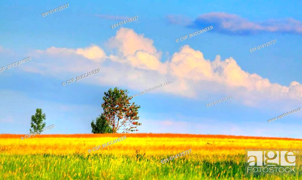 Stock Photo: Landscape with coloured meadows and clouds.