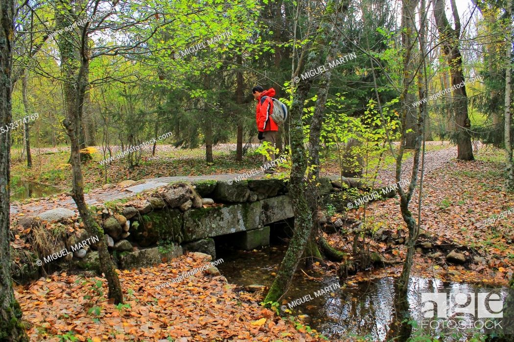 Stock Photo: A small stone bridge over a creek leads to the Bosque de Finlandia (Finnish Forest), part of the Los Batanes land near El Paular and close to the Lozoya river.