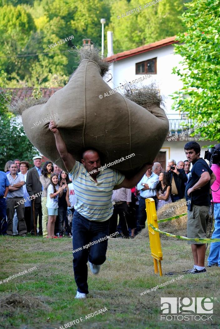Stock Photo: Asturian traditional sports, running test load of grass Benia de Onis, Asturias, Spain.