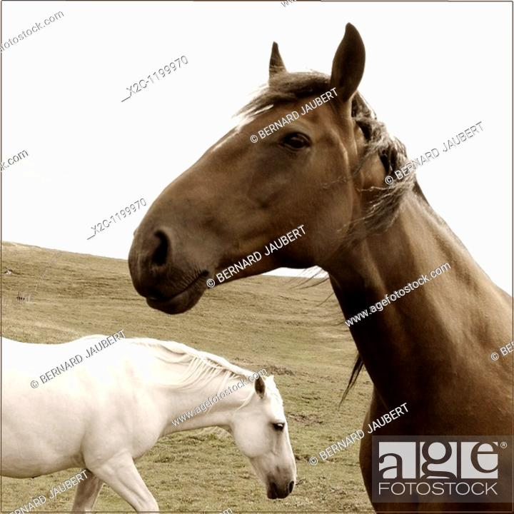 Stock Photo: Two horses.