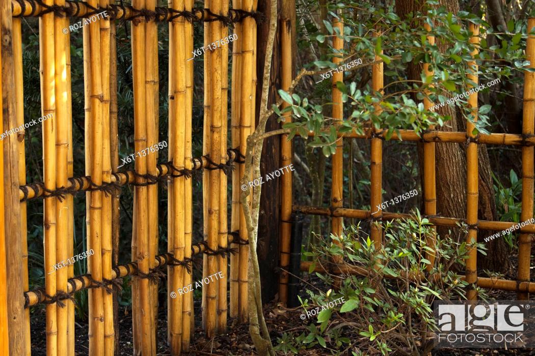 Stock Photo: Traditional Japanese bamboo fence tied with black cord in a garden.
