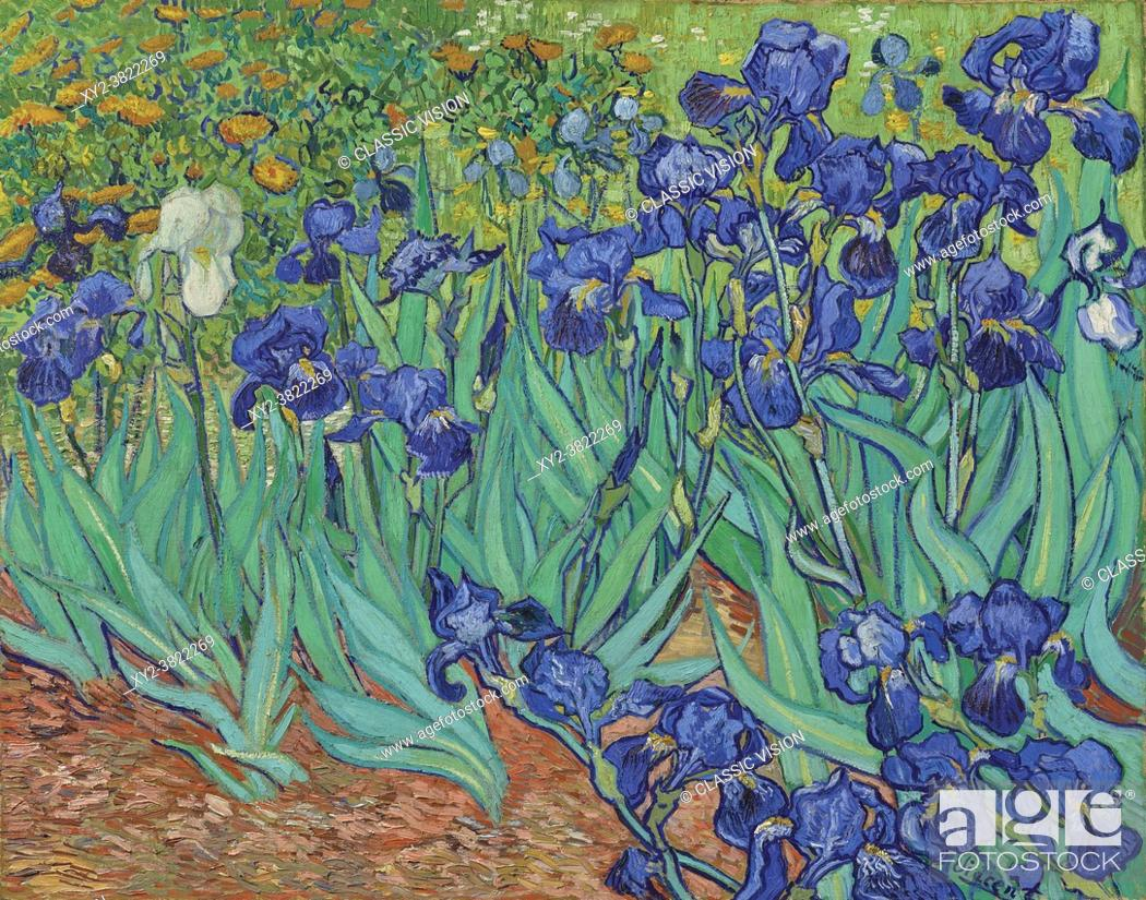 Stock Photo: Irises by Vincent van Gogh. Vincent van Gogh, 1853 - 1890, Dutch Post-Impressionist artist. Irises was painted in 1889 while van Gogh was in the asylum at.