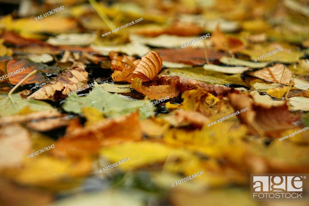 Stock Photo: backgrounds, autumn, background, autumnal, autumn-like, alfred.
