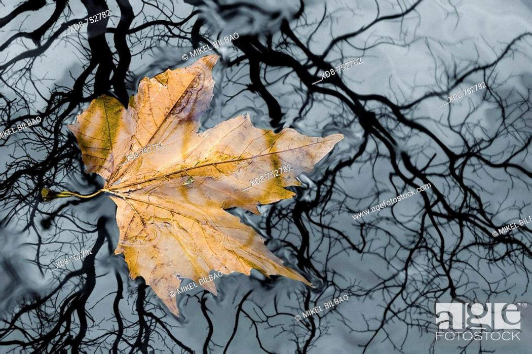 Stock Photo: Floating leaf on a river, Ason river, Cantabria, Spain.