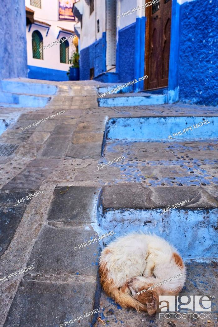 Stock Photo: Morocco, Rif area, Chefchaouen (Chaouen) town, the blue city, street cat.