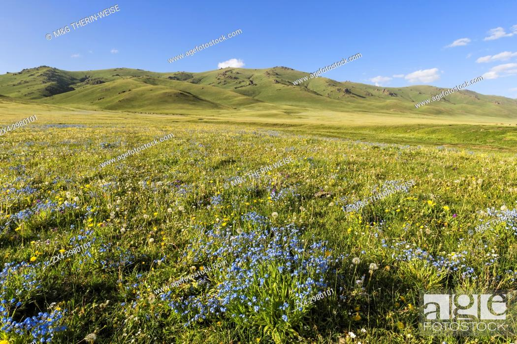 Imagen: Wildflowers, Song Kol Lake, Naryn province, Kyrgyzstan, Central Asia.