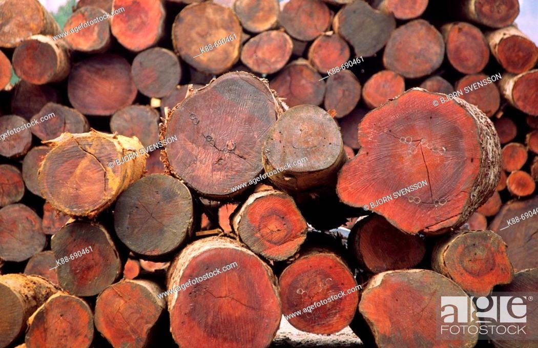 Stock Photo: Teak logs at a lumber yard in Daluo, near the Burmese border, Xishuangbanna, Yunnan, China.
