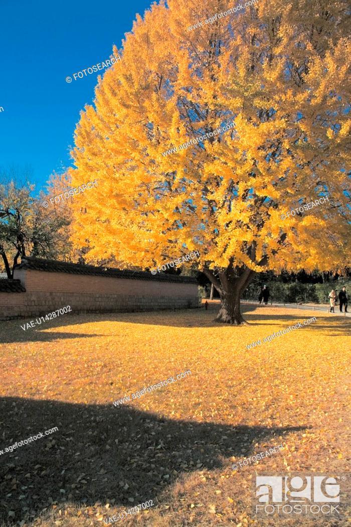 Stock Photo: scene, park, landscape, leaves, tree, scenery.