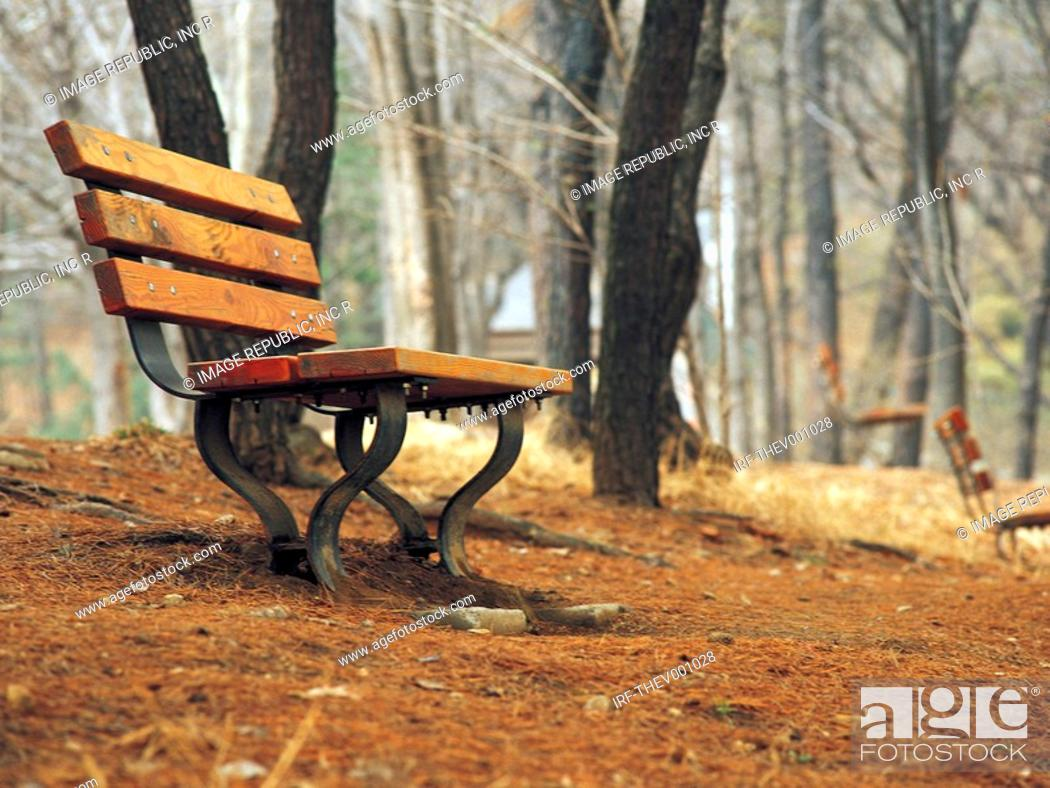 Stock Photo: bench in the forest.