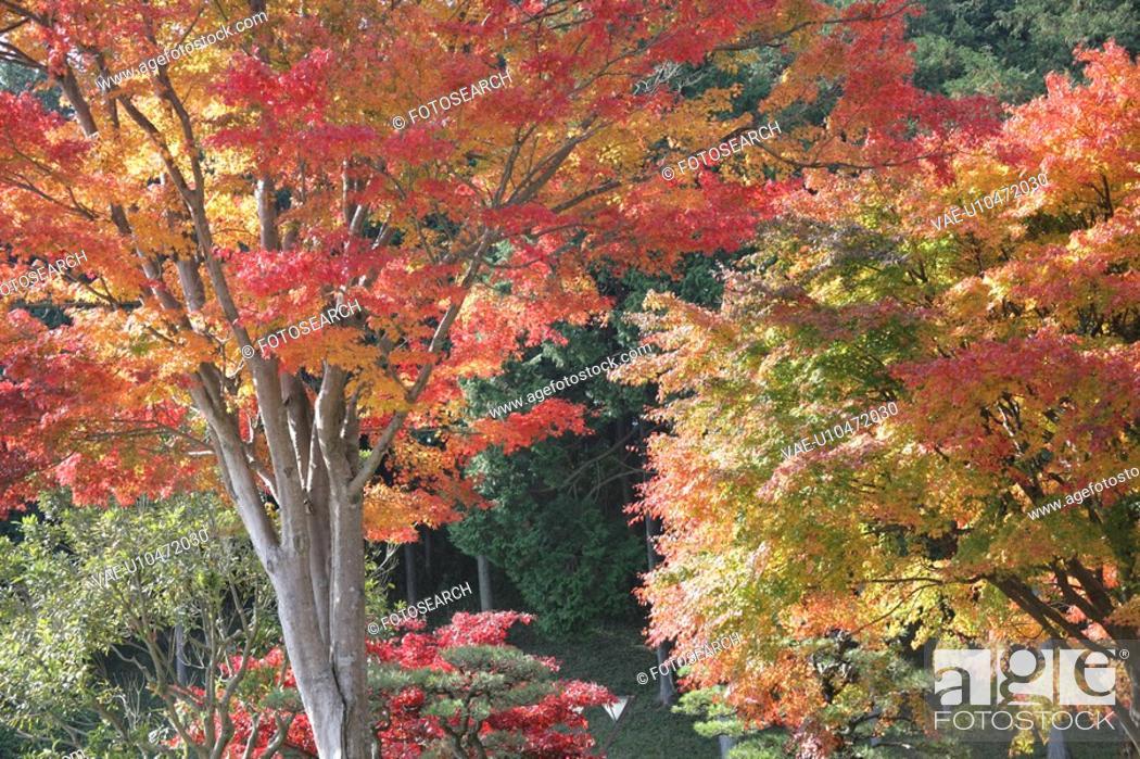Stock Photo: Autumn Leaves.