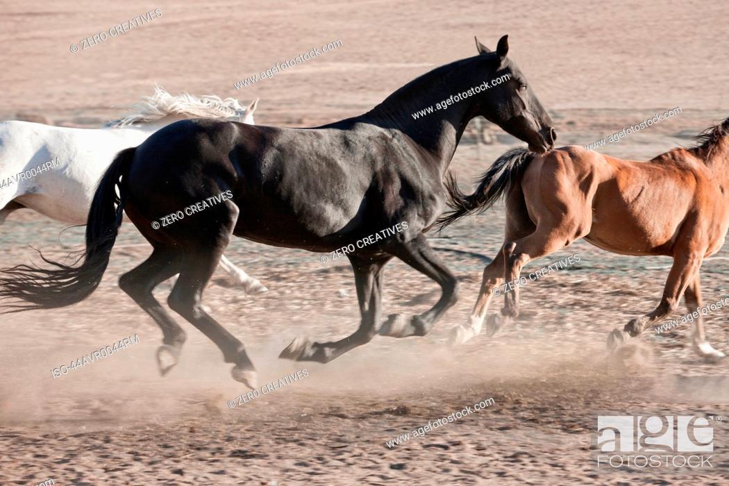 Stock Photo: Horses running in dusty pen.