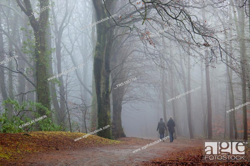 Stock Photo: man and woman having a walk in a woodland path, in mist , winter  Kilmarnock Country Park, Ayrshire, Scotland.