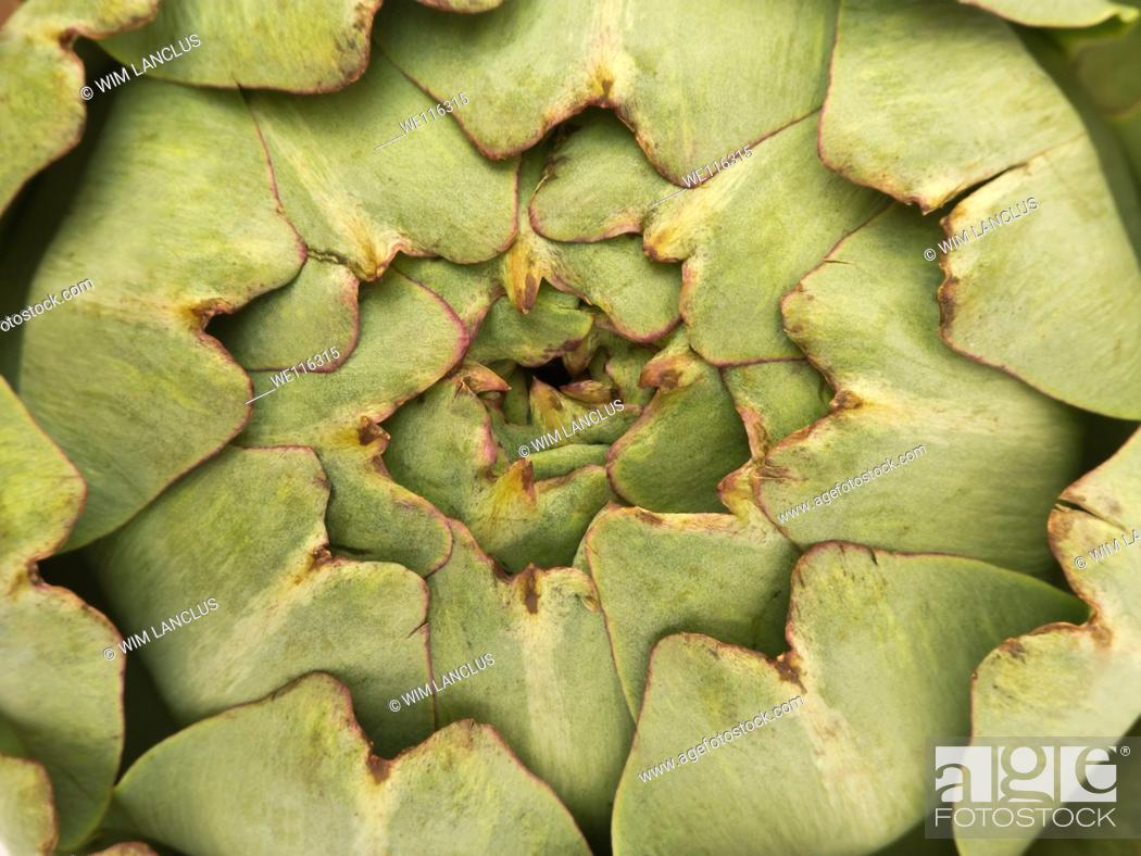 Stock Photo: Abstract macro shot of an artichoke.
