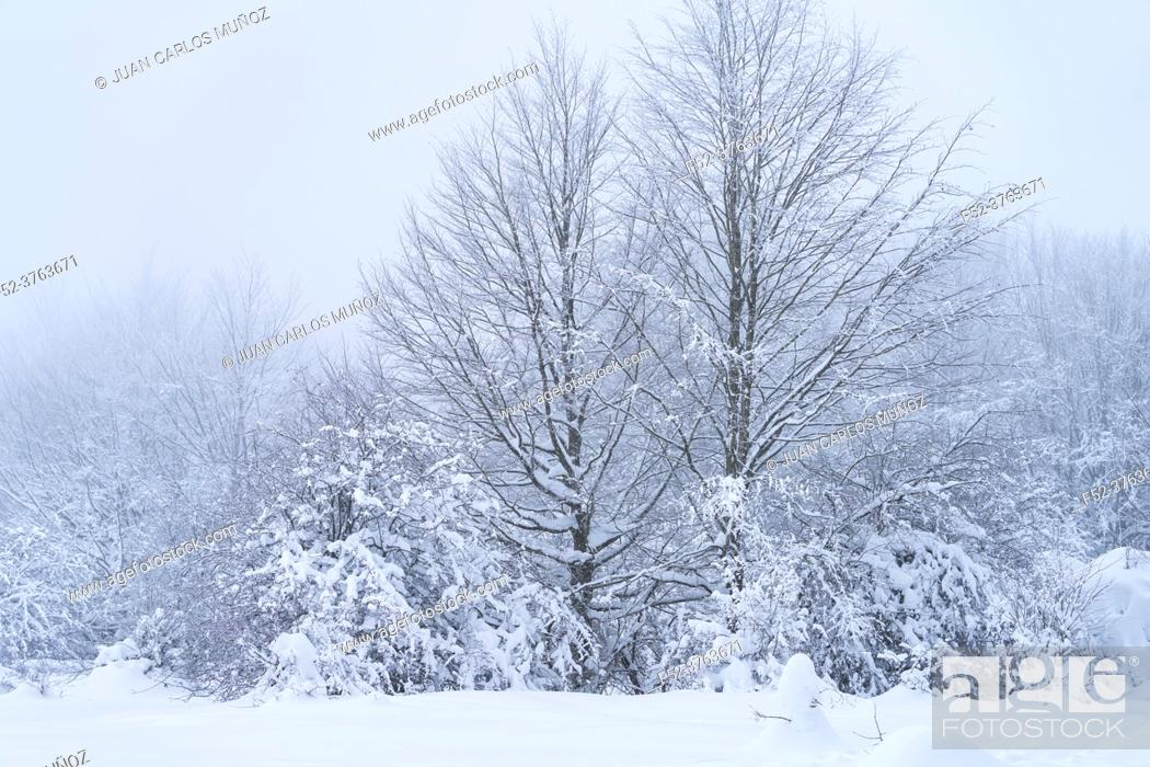 Stock Photo: Snowy landscape in winter in the Port of Opakua, in the Natural Park of the Sierra de Entzia. Alava. Basque Country. Spain. Europe.