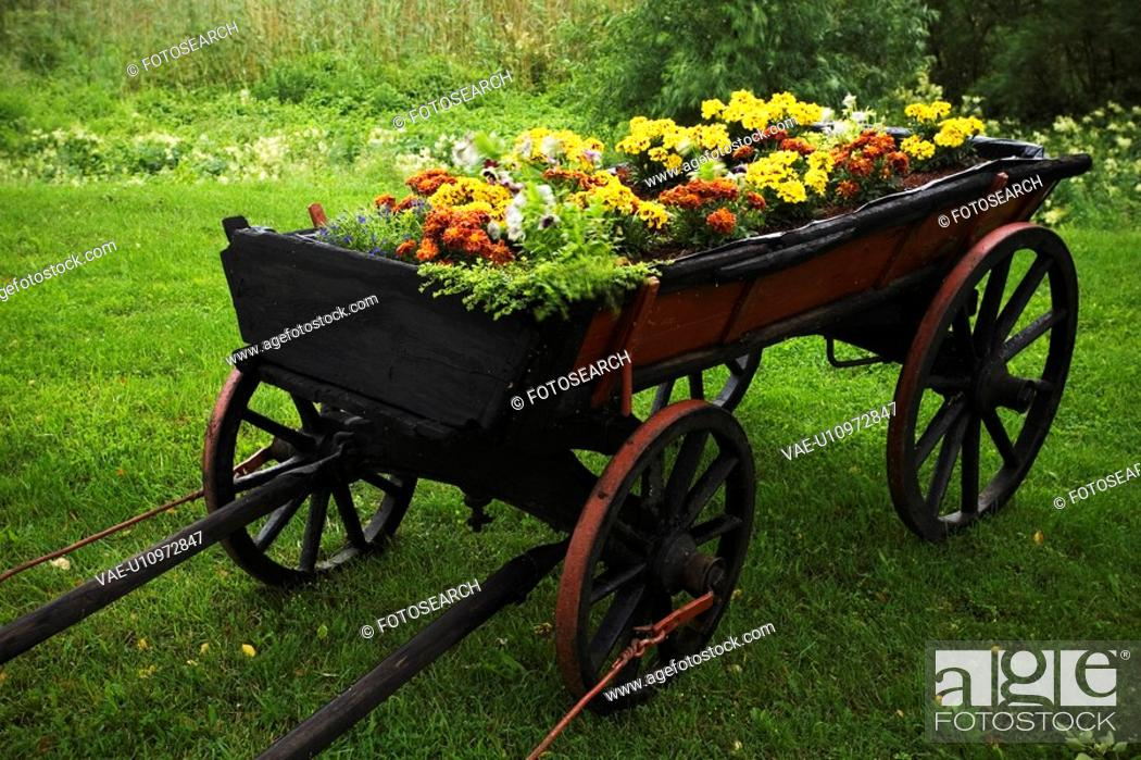 Stock Photo: Blooms, Blossom, Bushes, Cart, Colorful.