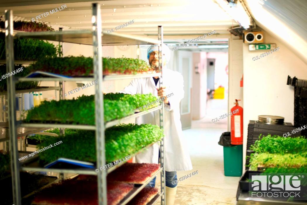 Stock Photo: Worker pushing trolley of freshly grown vegetables.