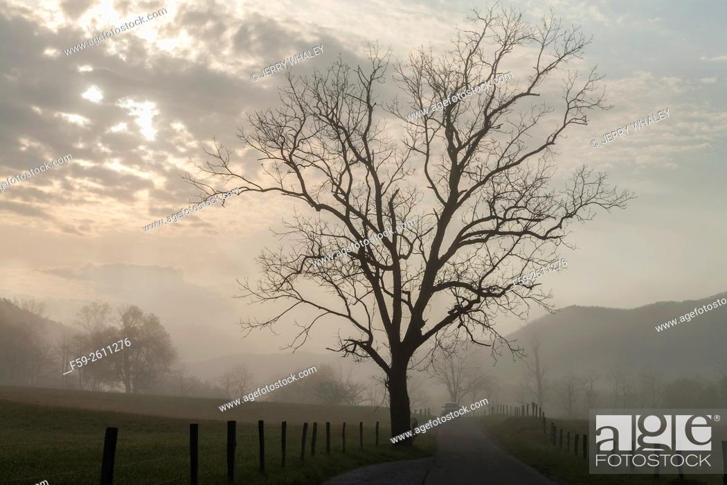 Stock Photo: Lone tree in the spring landscape in Cades Cove, Tennessee, USA.