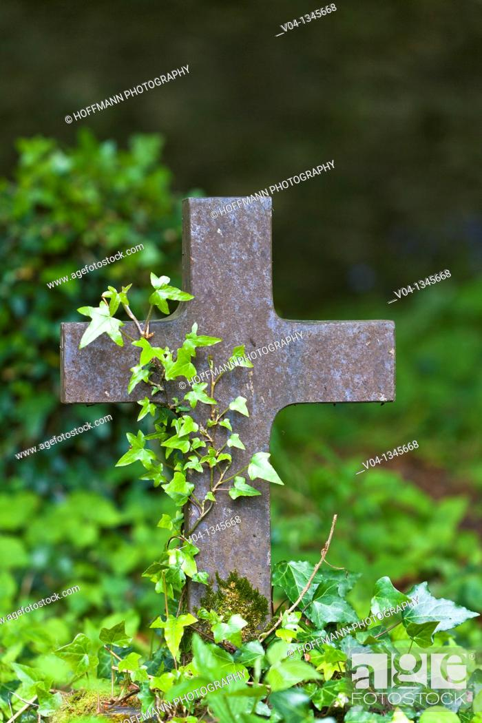 Stock Photo: Cross at a graveyard at Muckross Abbey, County Kerry, Ireland, Europe.