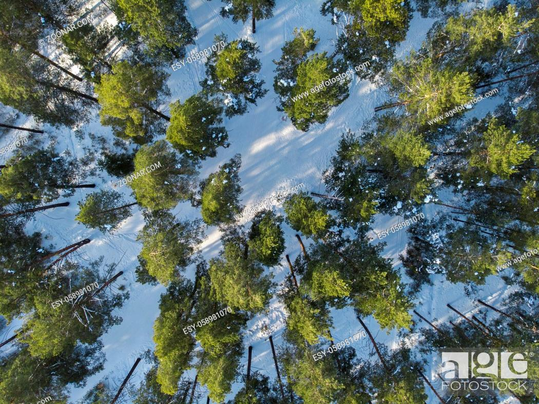 Stock Photo: Aerial view of winter siberian forest.