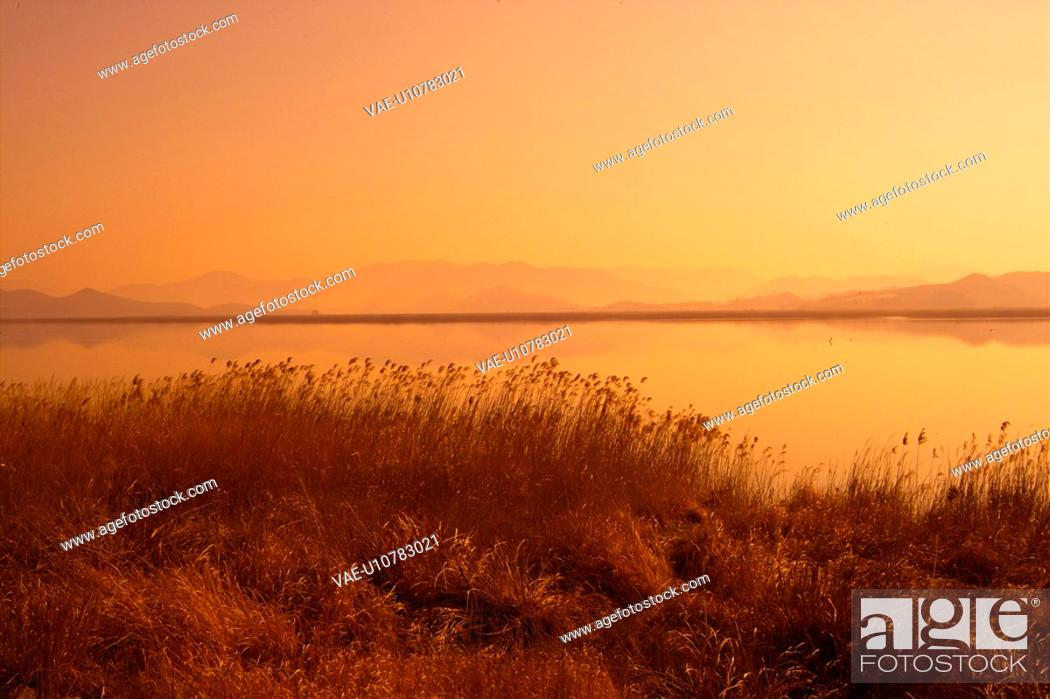 Stock Photo: eulalia, sunset, plant, scenery, nature, natural world, river.