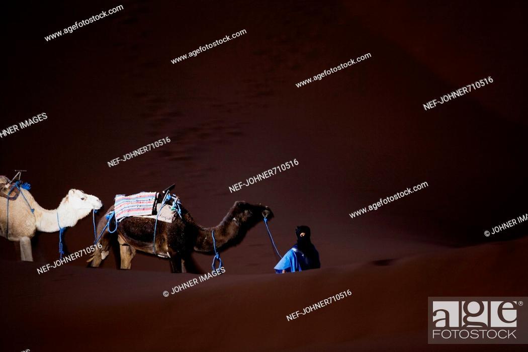 Stock Photo: Berber walking with dromedaries in the desert, Morocco.