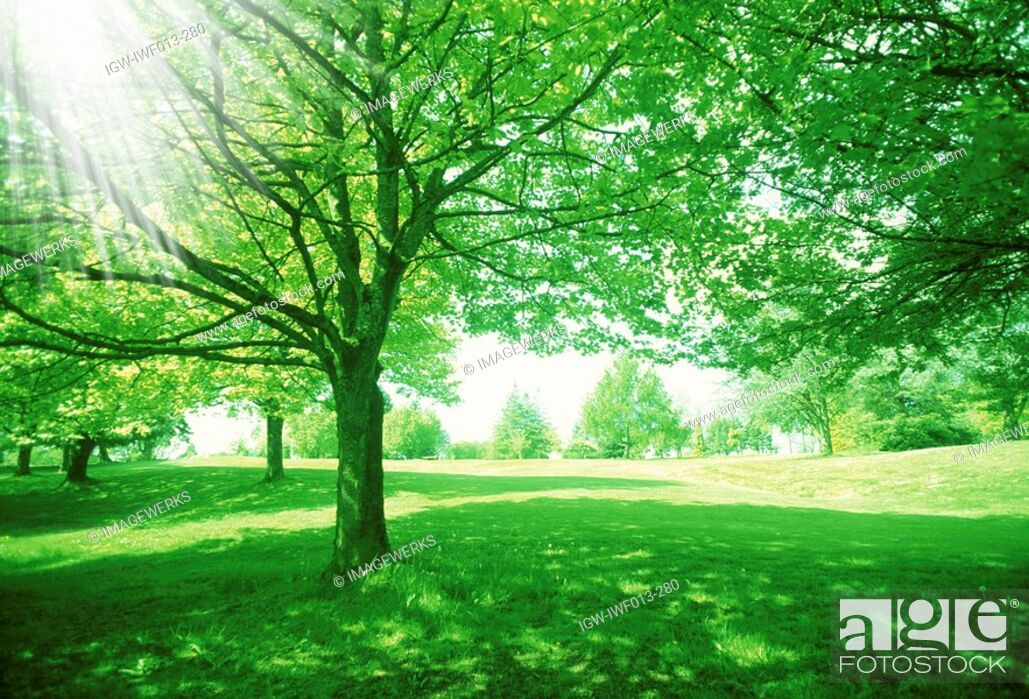 Stock Photo: Landscape with trees.