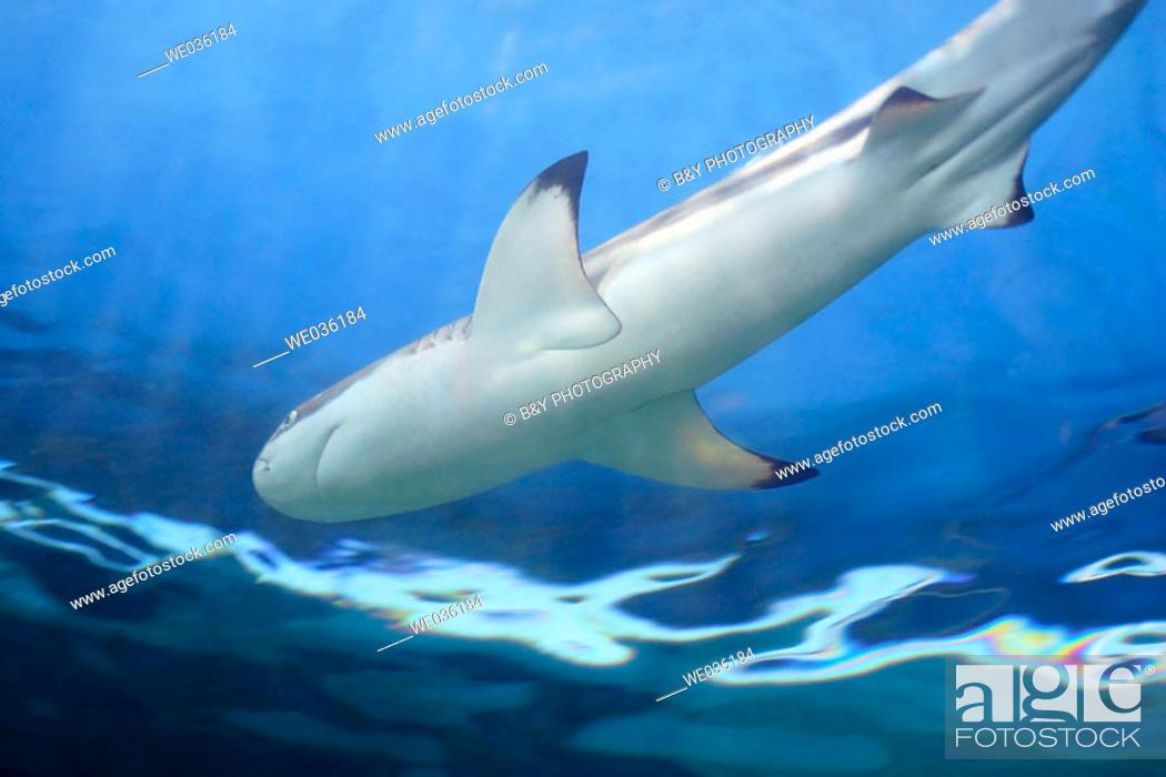 Stock Photo: Shark.
