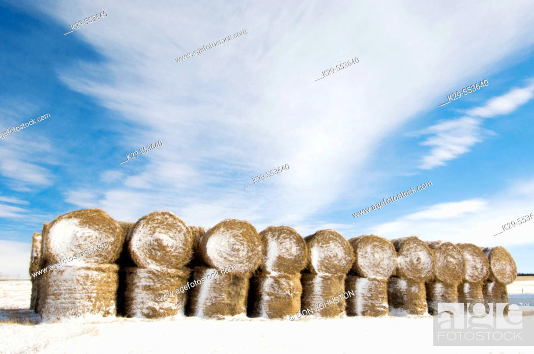 Stock Photo: Stacked hay bales in snowy prairie. Alberta, Canada.