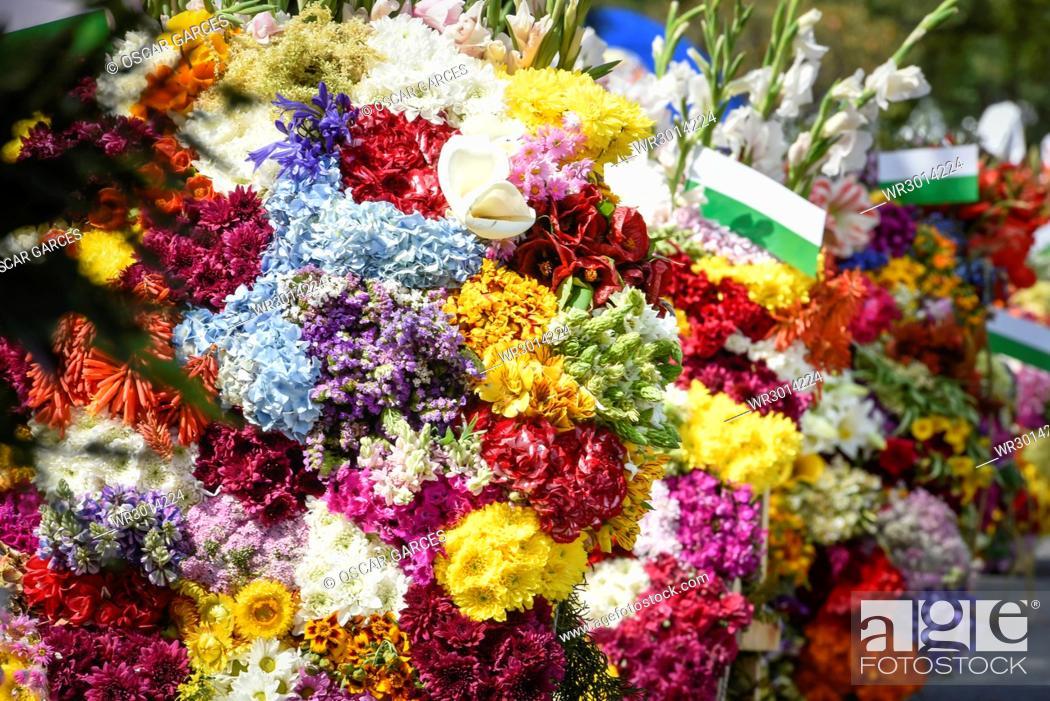 Imagen: Desfile de Silleteros, Feria de las Flores, Medellin, Antioquia, Colombia.