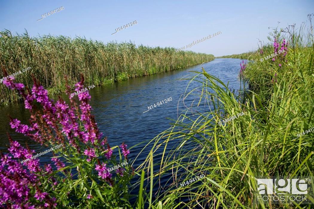 Stock Photo: Rumania Delta del Danubio. El delta del Danubio es una zona muy importante desde el punto de vista ecológico; ya que constituye un extenso humedal utilizado por.