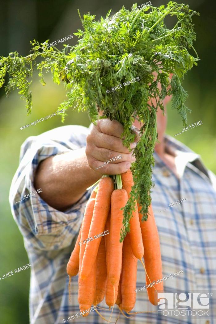Stock Photo: Senior man with carrots obscuring face.