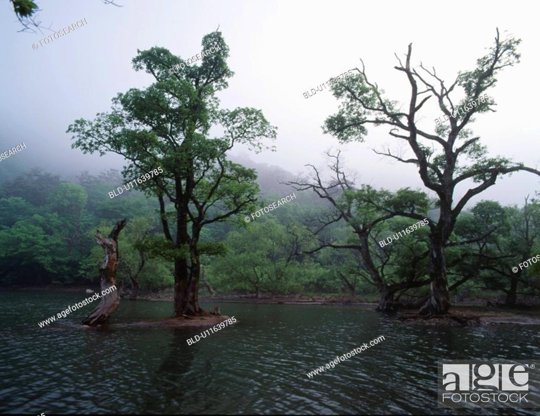 Stock Photo: mountain, scene, tree, lake, river, nature.
