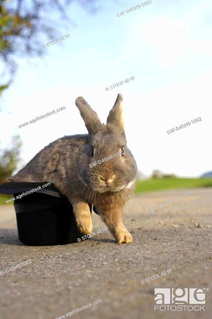 Stock Photo: Grey rabbit sitting in a top hat, selective focus.