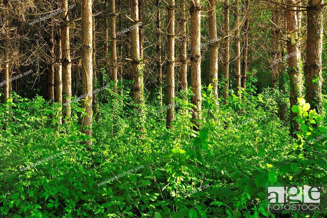 Stock Photo: forest beside Lac des Graoussettes, Lot-et-Garonne Department, Aquitaine, France.
