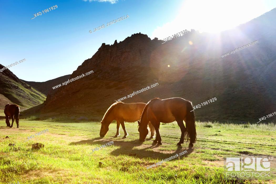 Stock Photo: The sun falls off a mountain in the Gobi desert and the last rays of light illuminate the horses.