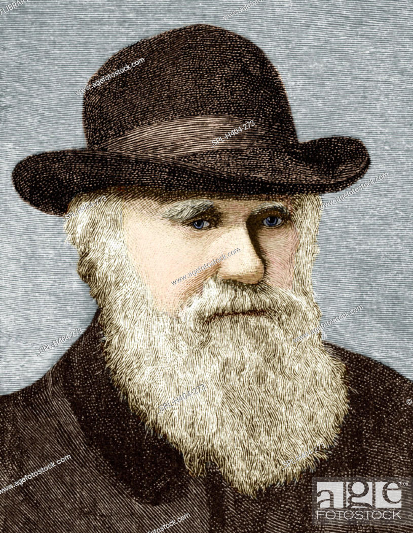 Stock Photo: 'Charles Darwin (1809-1882),  British naturalist. Darwin studied medicine and theology, but was most interested in natural history.