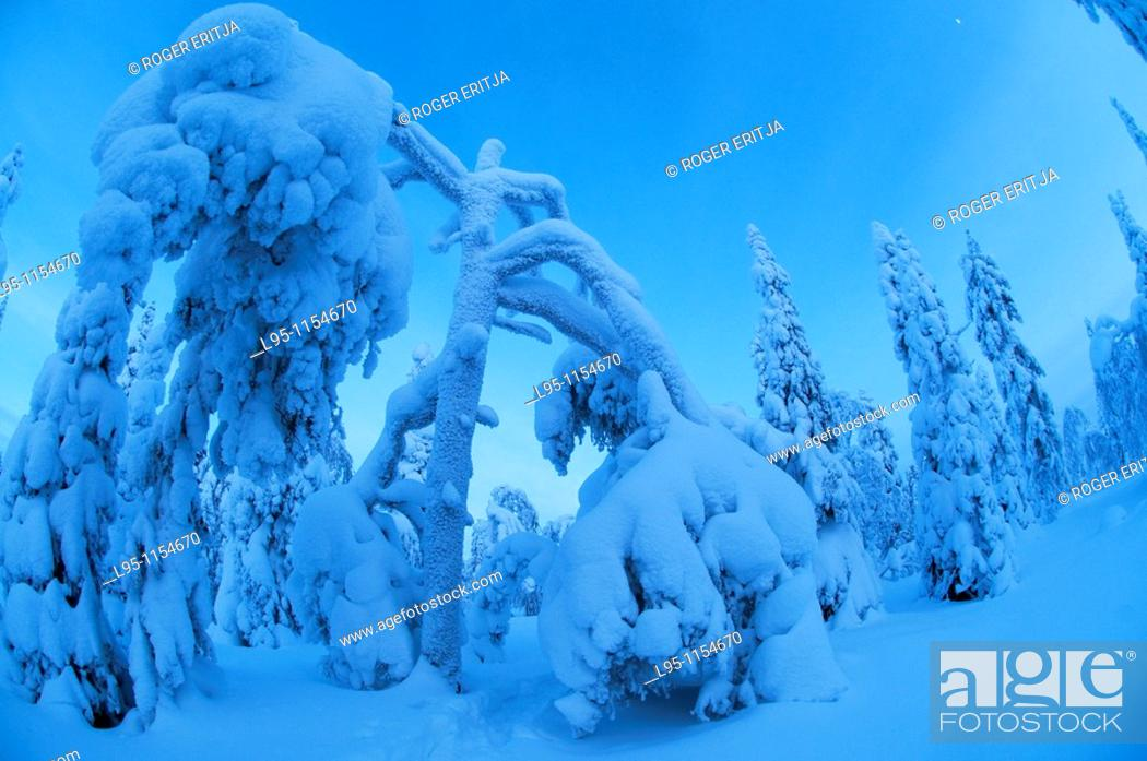 Stock Photo: Snow landscapes in February with extreme cold conditions, Kuusamo, Finland.