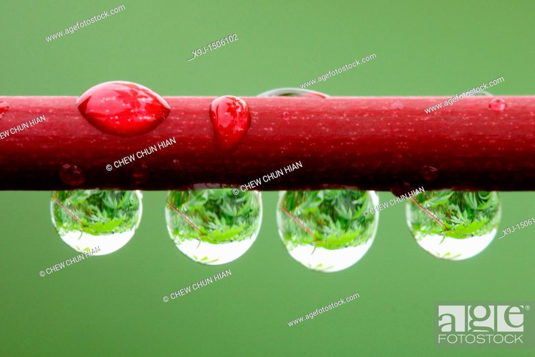 Stock Photo: Closeup of dew.