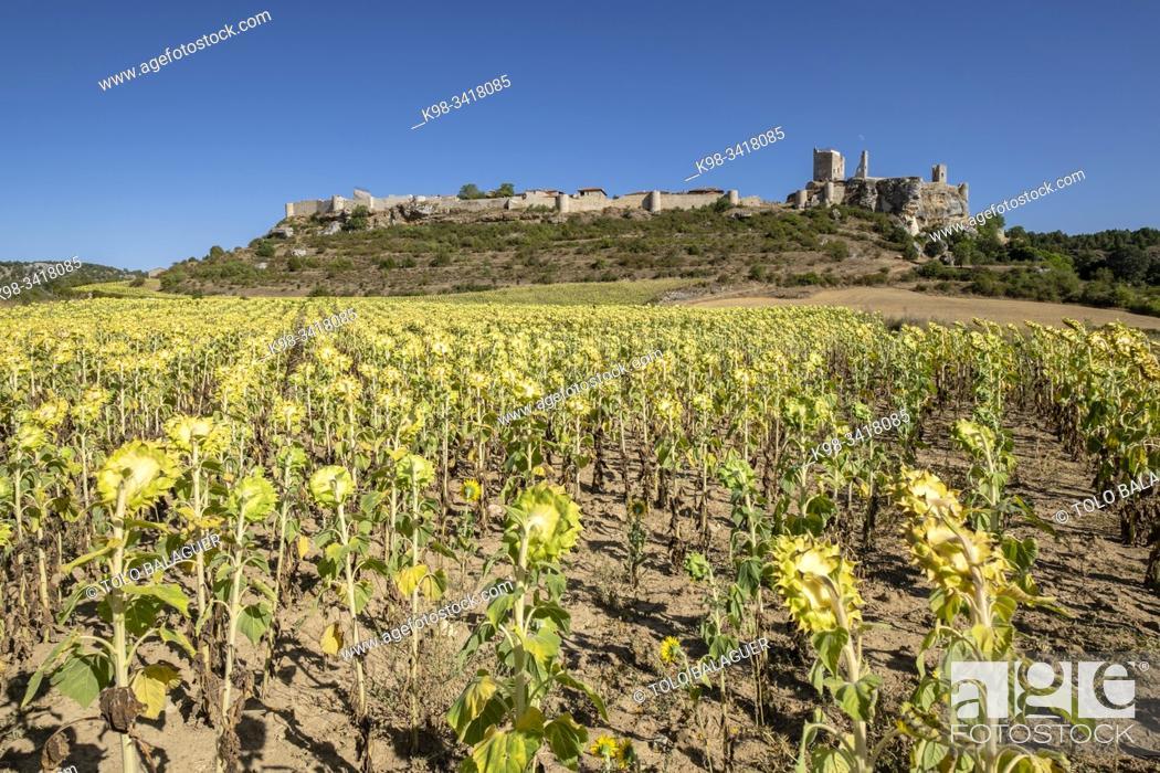 Stock Photo: Castillo de Calatañazor, Castillo de los Padilla, Soria, Comunidad Autónoma de Castilla-León, Spain, Europe.