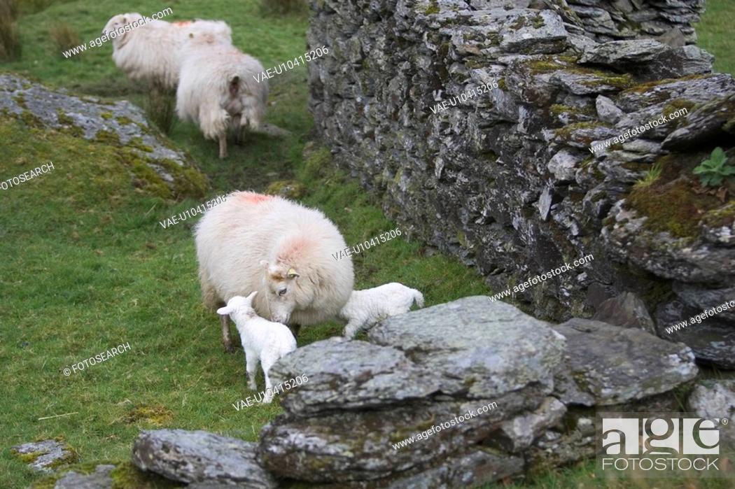 Stock Photo: Animal Family, Female Animal, Day, Cute, Adult Animal.