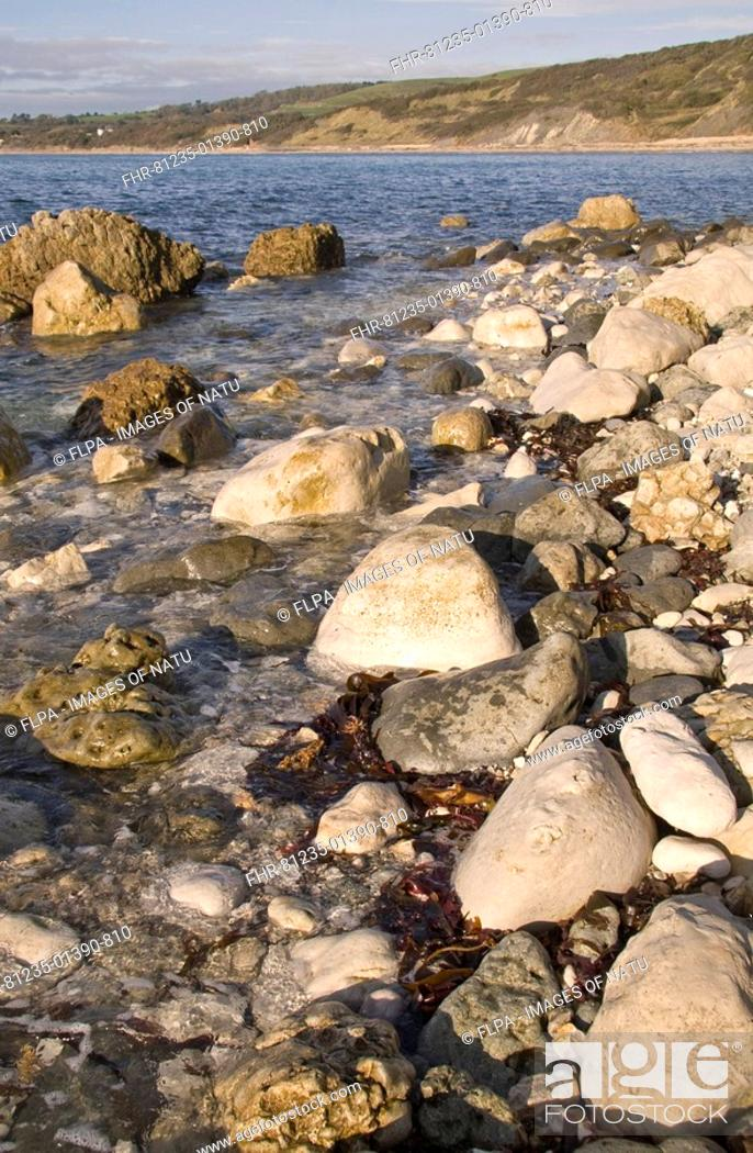 Stock Photo: Rocky shoreline, view towards bay with cliffs in background, Jurassic Coast, Ringstead, Dorset, England, autumn.