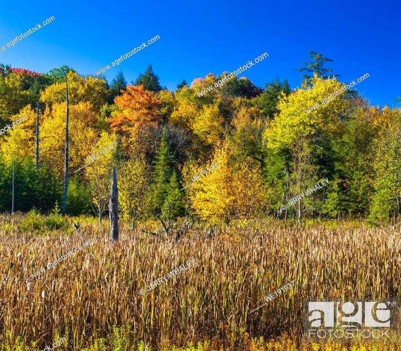 Stock Photo: Autumn at Canaan Valley State Park, WV.