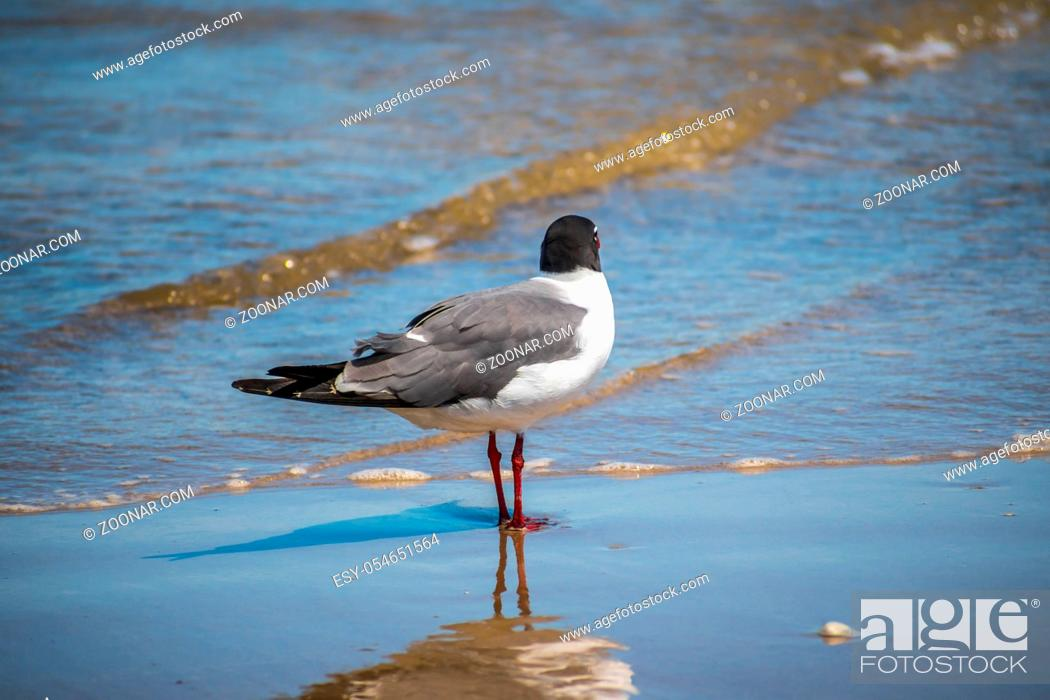 Stock Photo: A relaxing seagull enjoying the view around the coastline of the seashore.
