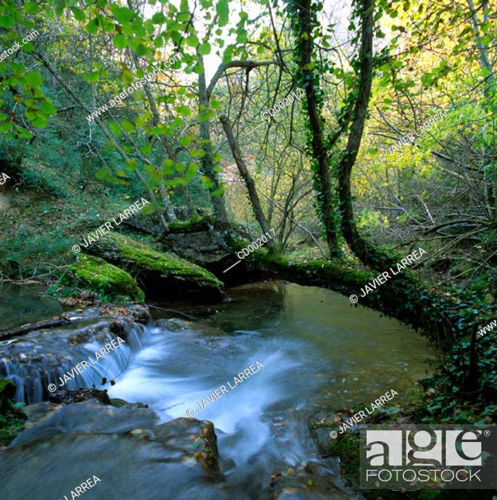 Stock Photo: Purón River. Valderejo Natural Park. Álava. Spain.