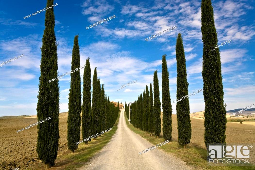 Stock Photo: Cypress avenue (Cupressus) leads to a country house in the valley Val d'Orcia Crete Tuscany Italy.