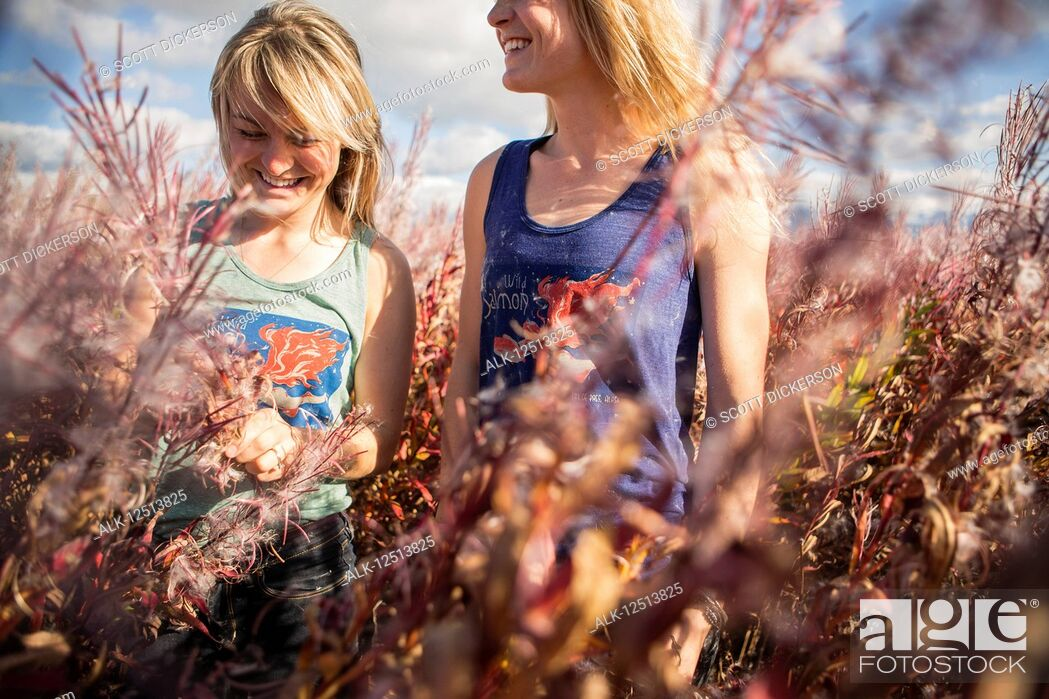Stock Photo: Two young women standing amongst bloomed out Firewood near the Homer coastline, South-central Alaska; Homer, Alaska, United States of America.