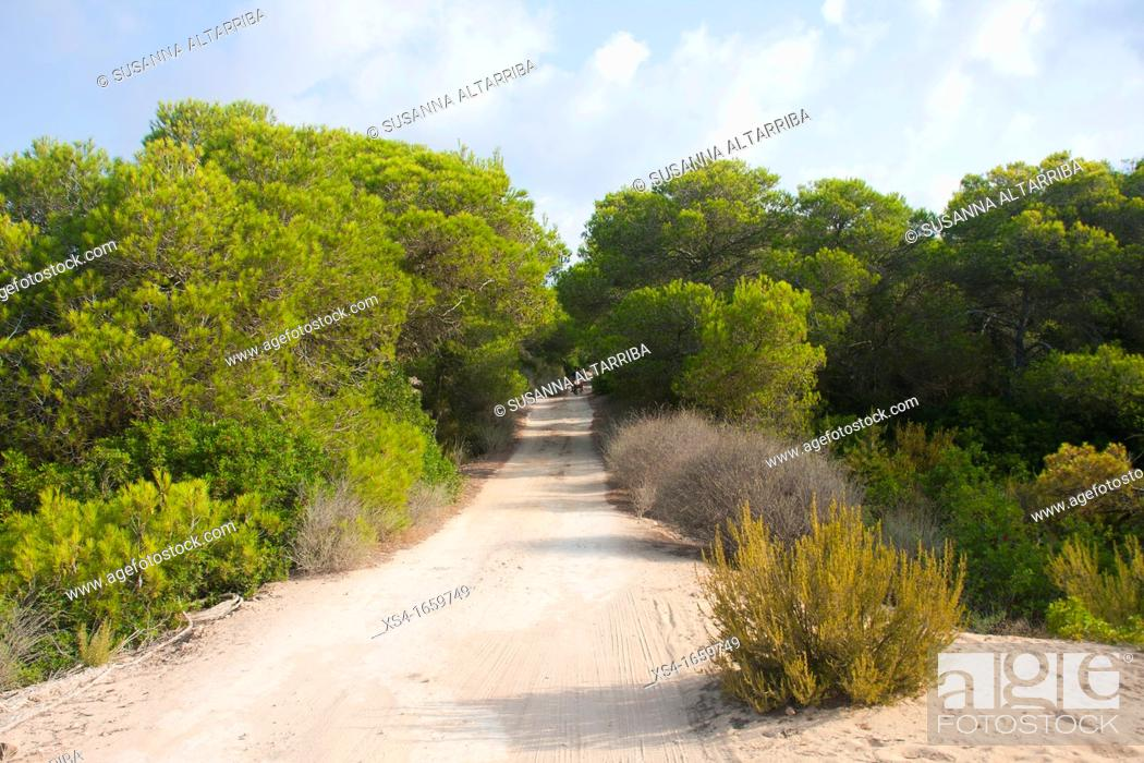 Imagen: Sandy road to Formentera a scooter out among the pines  Balearic Islands, Spain, Europe.