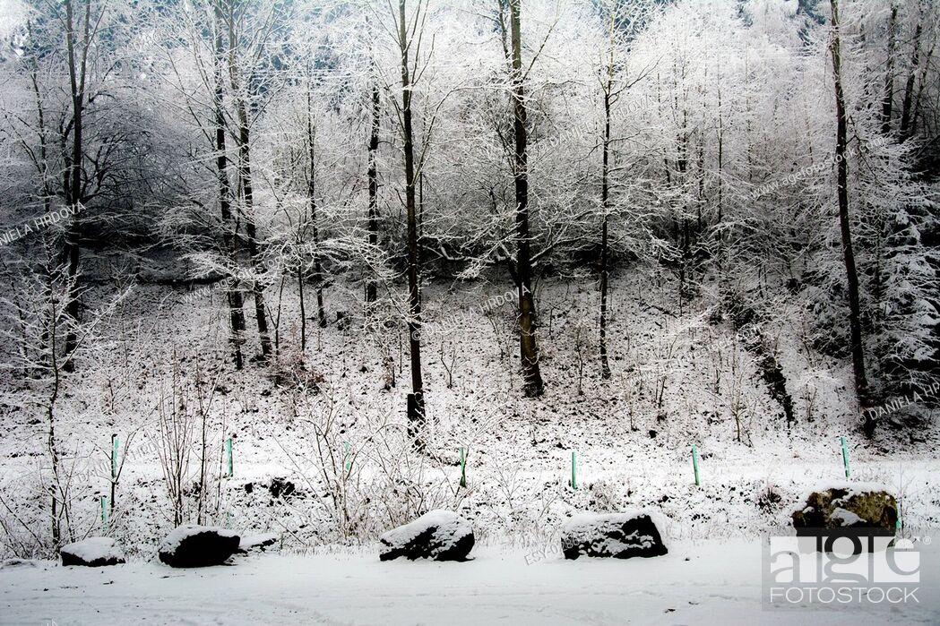 Stock Photo: Vysocina, winter in Czech republic.