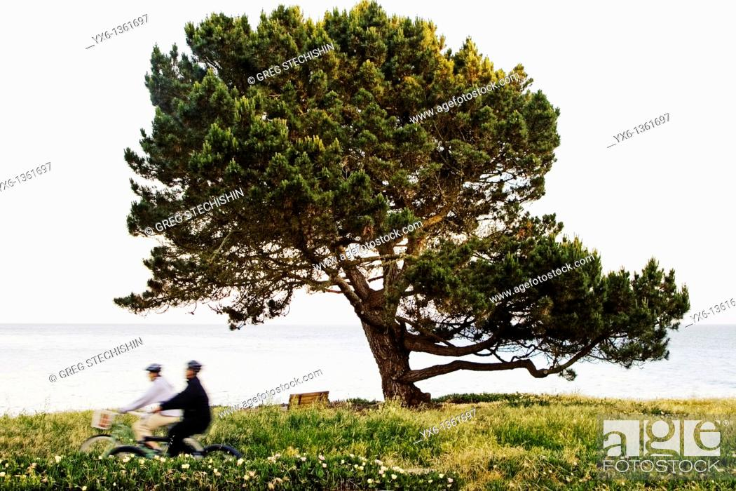 Stock Photo: Two people biking in a park along the ocean in Santa Cruz, California.